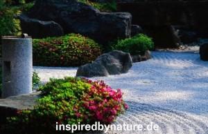 Screen shot 2011 02 05 at 6.30.16 PM 300x194 Japangarten in Deutschland   Rhododendron Blüte
