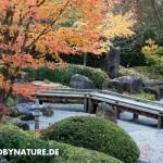 zengarten eu 1 150x150 JAPANISCHER GARTEN in Deutschland   Herbst 2012