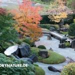 zengarten eu 5 150x150 JAPANISCHER GARTEN in Deutschland   Herbst 2012